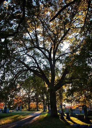 Shadowed Tree ~ Mount Olivet Cemetery, Nashville, TN