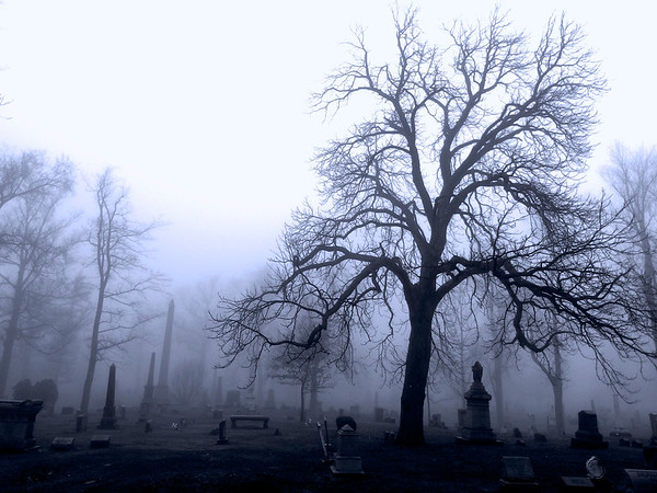 Tree in Fog 3