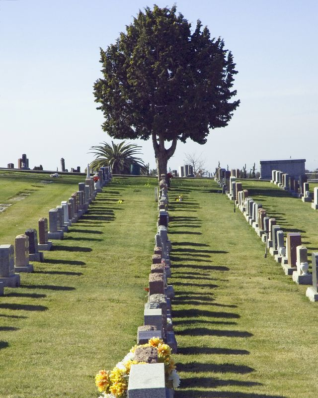 Tree Among Headstones, Lone Tree Cemetery, Hayward, CA