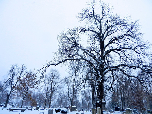 Tree in Snow 3 2012