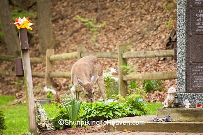 Deer at Urn Garden, Riverside Cemetery, Cleveland, Ohio