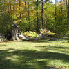 Tree down. October 12, 2009.