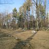 Trees. Eastside. 2006.