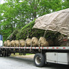 Trees arriving. May 23, 2012.