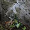 No Shrinking Violet (Ada Cemetery, Ada MI)