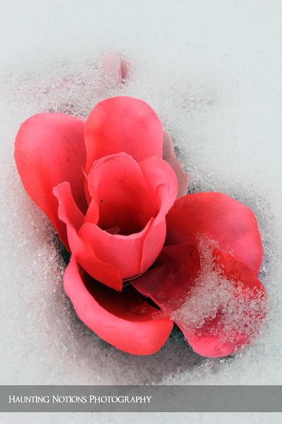 Blossom Of Snow (Saint Stanislaus Cemetery, Dorr MI)