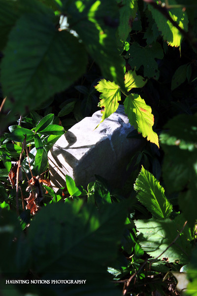 Leafy Greens (Saint Patrick's Cemetery, Bowne Township MI)