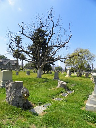 Though many, many trees were removed to make this cemetery, there are some old survivors.