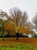 Autumn in Glendale - 1