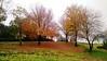 Autumn in Glendale - 3