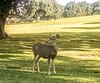 The deer are right at home and just stand there and look at ya.