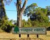 Forest Lawn Savannah