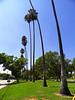 Mount Olive Palms