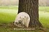Gravestone at St. Patrick's Cemetery, Sauk County, Wisconsin