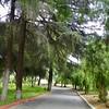 Trees - 4