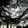 Trees - 5