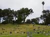 Field of Headstones 2