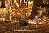 Native American Cemetery, Rural America