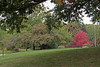 Lake View Cemetery, Cleveland, Ohio    Nov. 15, 2013<br /> <br /> Across from the Garfield Monument