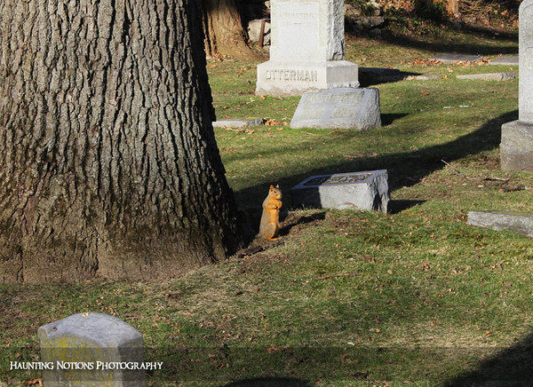 You Lookin' At Me? (Garfield Park Cemetery, Kentwood MI)