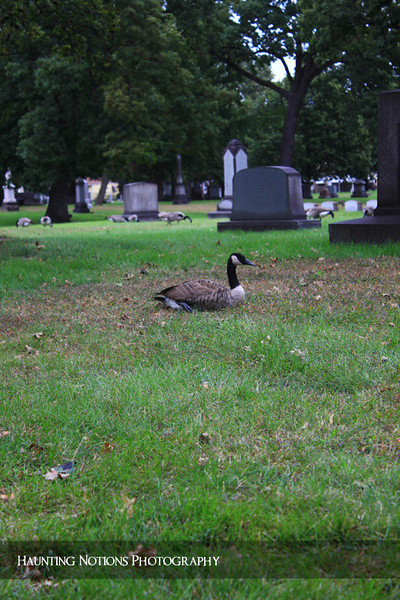 Down But Not Out (Woodmere Cemetery, Detroit MI)