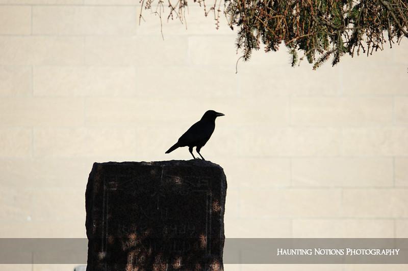 Nevermore (Oak Hill Cemetery, Battle Creek MI)