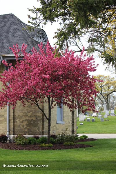 Sanguine (Calvary Cemetery, Milwaukee WI)