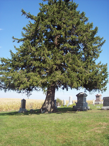 Tyrone Cemetery, Talleyrand, Iowa.  It's been many years since a burial took place here but this large tree watches over everything.
