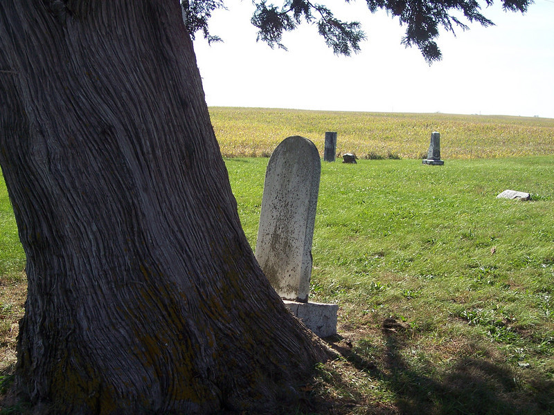 Tyrone Cemetery, Talleyrand, Iowa.  The tree has grown larger over the years and tipped this gravestone so that it appears to be looking out over the billowing cornfields.