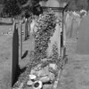 Headstone covered in ivy