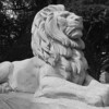 Grunow (Lion)