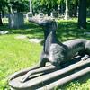Stein's greyhound guardian