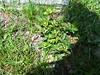 04-29-2009-UpsonCornersCemeteryStones (17)