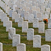 Several U.S.C.T. (US Colored Troops) buried in Cave Hill Cemetery, Louisville, KY