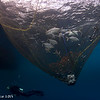 Fishing net - Papua by Tracey Jennings
