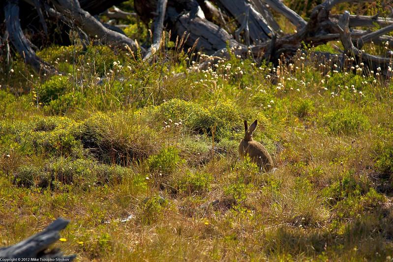 Wild Hare at Cerro Torre Trail
