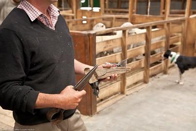 Shearing scissors