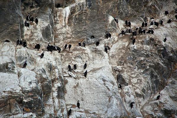 Cormorans in Ultima Esperanza fjord