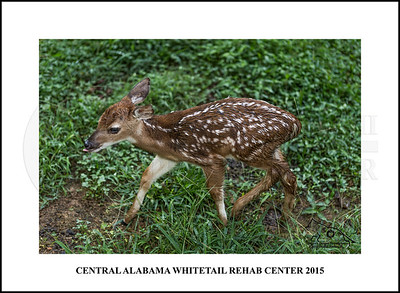 Central Alabama Whitetail Rehab Center - Trussville, Alabama.