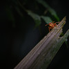 Jungle insects.