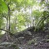 Howlar Mondays - Tikal, Guatemala