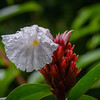 Flowers at Tikal