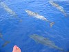 On our boat ride back, a large group of dolphins raced in front of the bow of the boat, just a few feet under MY feet!