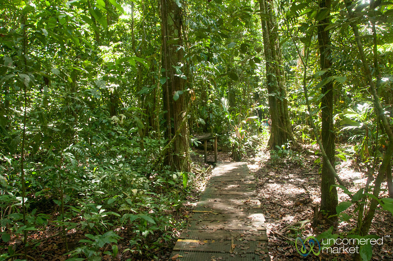 Rainforest Walk - Tortuguero, Costa Rica