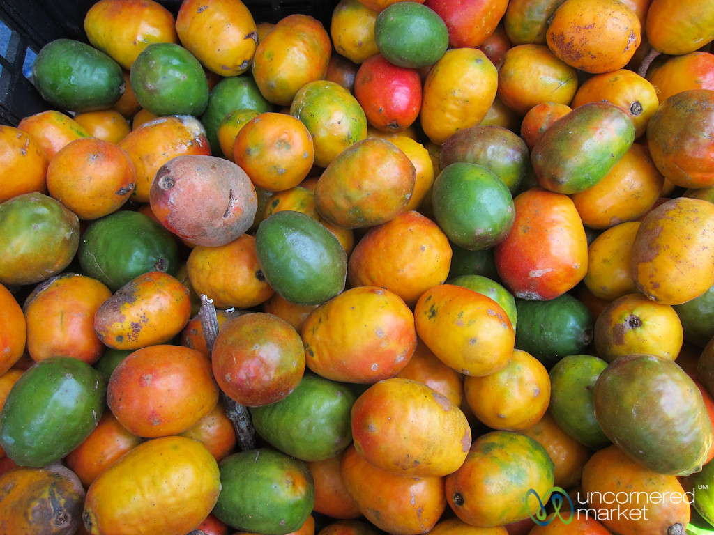 Jocote Fruit - Dominical, Costa Rica