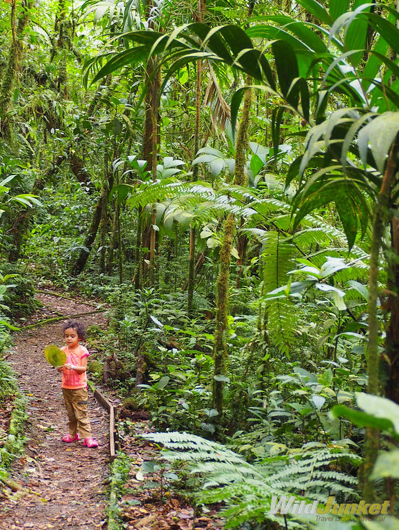 Costa Rica with Kids: My Detailed Family Travel Guide – Wild