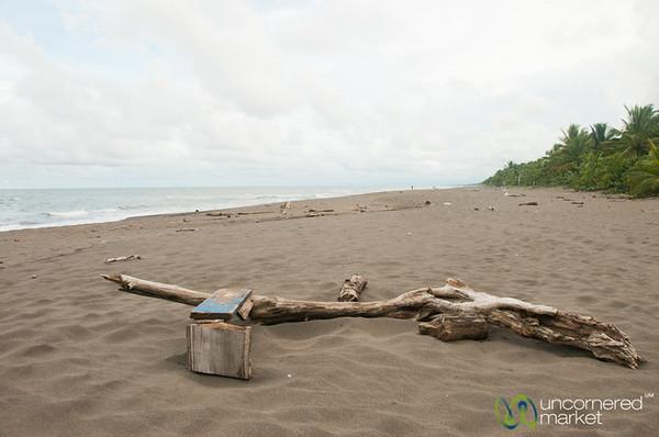 Driftwood on Tortuguero Beach - Costa Rica