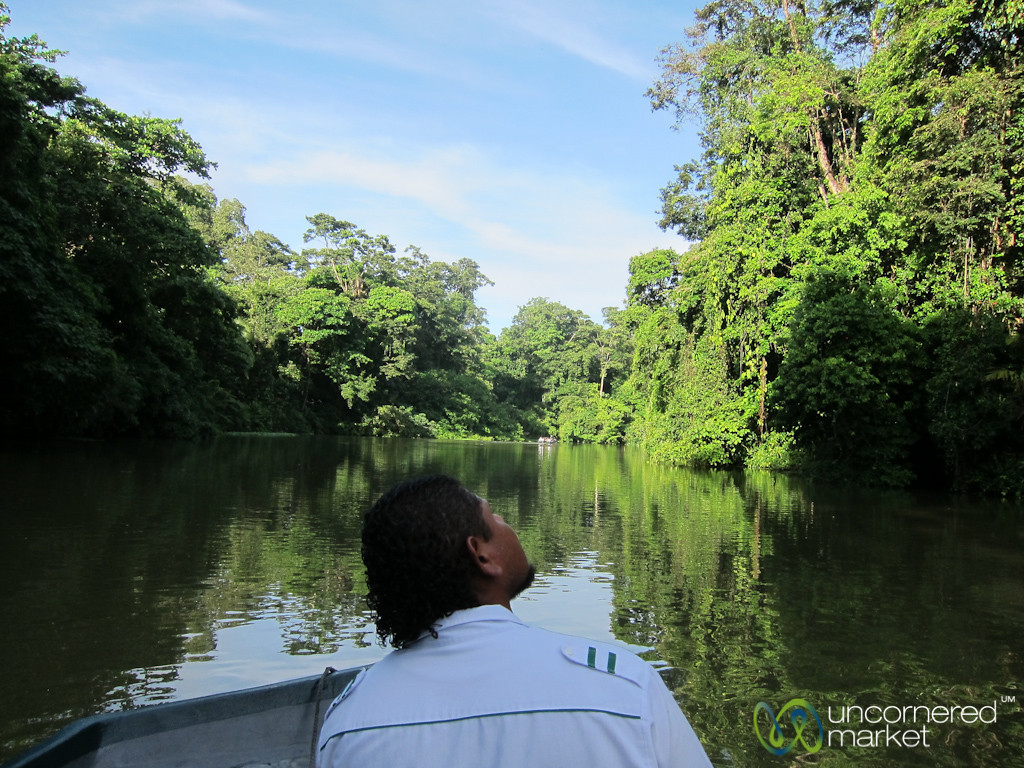 Guide and Boat Driver Looks for Wildlife - Tortuguero Canals, Costa Rica
