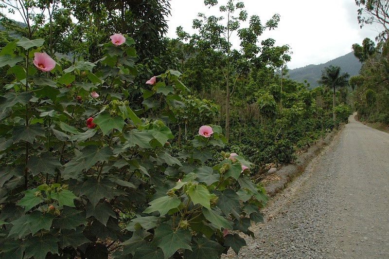 Among the plantings were these lovely rose bushes,