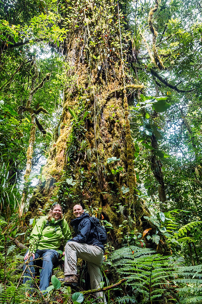 Ancient jungle trees in Monteverde
